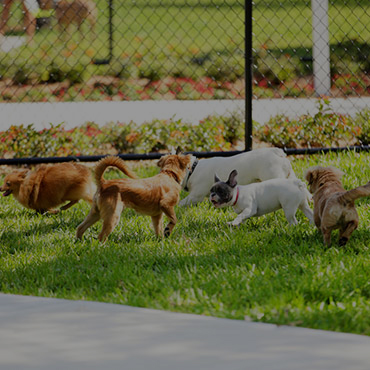 Large Dog Park at Green Grove Apartments